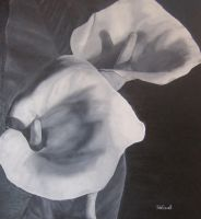 Lillies by julie-tugwell