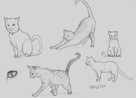 anatomy sketches 20100320 cats by Puffsan