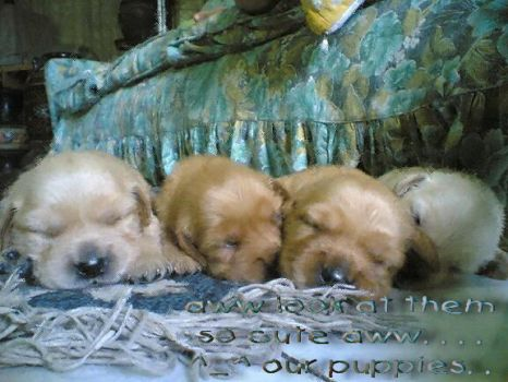 my four puppies by qilly