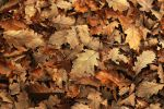 Autumn Leaves by CananStock