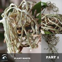 Roots Part 1 by creatief2