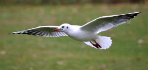 Gull Stock by FrankAndCarySTOCK