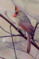 Herself by clippercarrillo