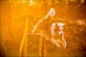 Evening agility by jollyvicky