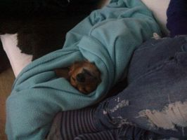 my dog is way to cute by evami