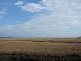 Tall Grass To The Sea by NieboAnielaKot