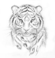 Celtic Tiger -sketch- by ChibiLeen