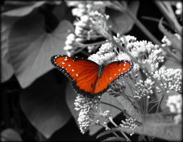 Butterfly Selective Color by AudraMBlackburnsArt