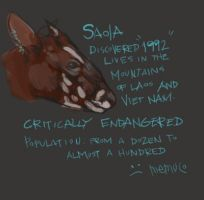 Saola Silent by memuco