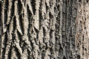 Wood Texture 05 by gatterwe