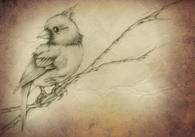 Bird by jml2art