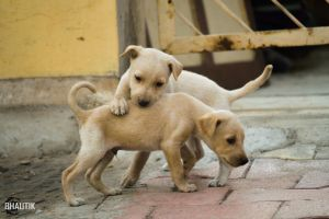 Cute puppies by bhautik1