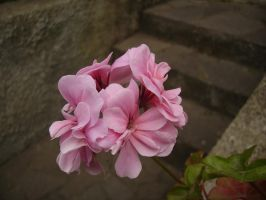 This-Pink-Flower by wetGround