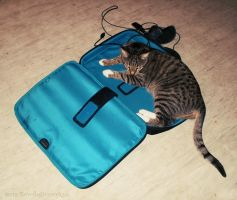 Kaylee in a laptop bag by RevelloDrive1630