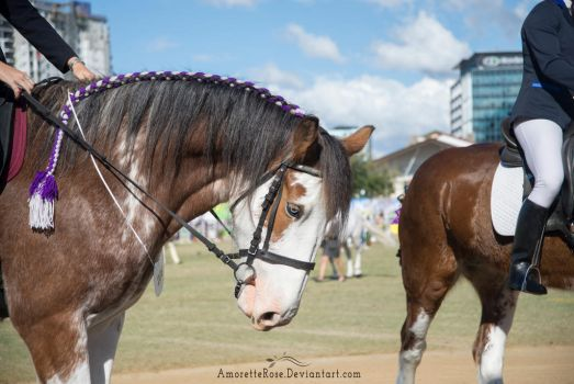 RQS Clydesdale #118 by AmoretteRose