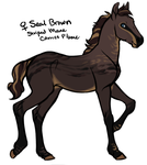 Seal Brown Filly for BVS-Isle by daughterofthestars