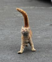 u like my tail? by cats-cats-cats