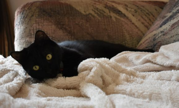 Aspen and her snuggly blankie by Maxwell1972
