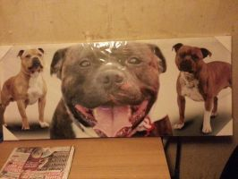 Staffy Canvas for my Room by demon1993