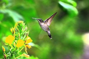 Humming bird at Caliper Lake by JordanCYork
