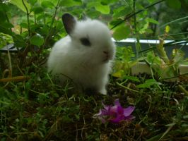 Cute baby rabbit by Hirotaka712