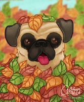 Autumn Pug by Cilitra
