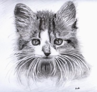 Cat by Tomiesio