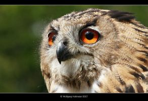 Owl by W0LLE