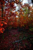 red forest by Sanyai90