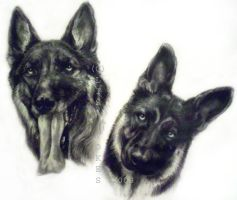 Four German Shepherds, WIP by wondergurly07