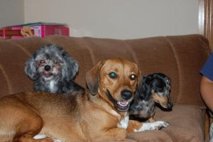 Toostie, Bailey, and Tinkerbelle! by LightehPaw