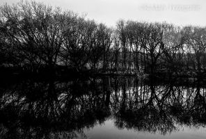 52 shades: no.41. Reflections by TLO-Photography