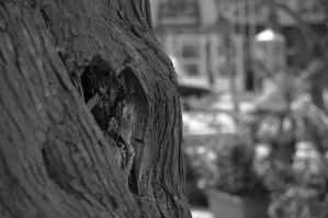 From a tree heart to the next by glos