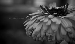 calendula by remember-the-pieces