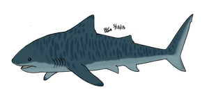 Tiger Shark by brittoniawhite