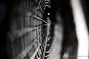 Spider Web by isischneider