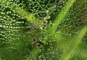 Dew Harvest by The-Underwriter
