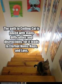 Path To Ceiling Cat by ladyAlyafaelyn