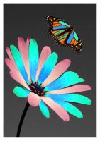 The Flower and The Butterfly by zboy2373