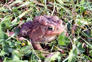 Friendly Mr. Toad - 2 by LadyAhz
