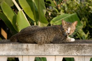 Another Cat by panuraj