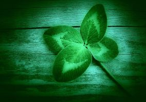 Four Leaf Clover by CanonSX20