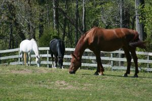 Horses 01 by dlc-nature-stock