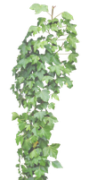 Hanging Ivy PNG.. by Alz-Stock-and-Art