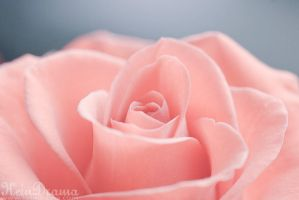 Sweet roses: Marzipan by KeinDrama