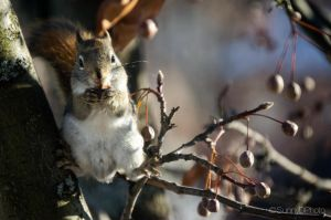 Squirrel eating a seed by sdhanjal115