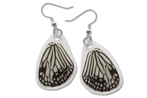Real Glassy Tiger Butterfly Wing Earrings by TheButterflyBabe