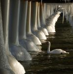 under the frozen pier by Wilithin