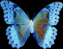 butterfly blue by heLpME-stocks
