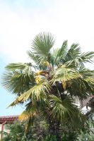 view to palm 3 by ingeline-art